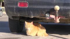 Cat rest lying in sunlight near car in city street Stock Footage