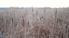 Dry stem, reeds swaying in the wind against a background of blue water Stock Footage