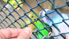 Cute parrots fight for food Stock Footage