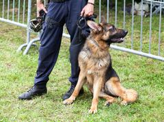 police dog - stock photo