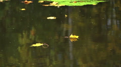 Autumn yellow leaves floating on the river Stock Footage