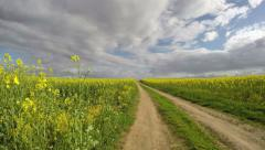 rapeseed field and gravel road. Farmland landscape, timelapse 4K - stock footage
