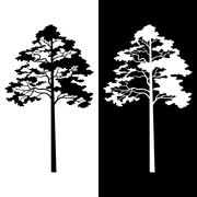 Pine Trees Black and White Silhouettes - stock illustration