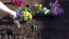 Planting seedlings and watering in backyard garden Stock Footage