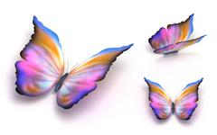 Colorful butterfly over white - stock illustration