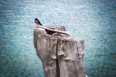 bird on tree stump - stock photo