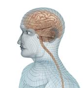 Human brain and body wire model Stock Illustration