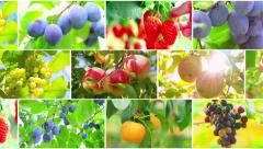 Harvest fruits. Fruit collage. - stock footage