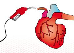 cardiac system - stock illustration