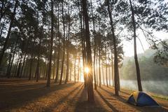 Sunset at Pine plantations Pang Ung, Mae Hong Son, Thailand. - stock photo
