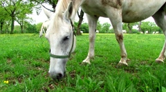 Horse eating grass in green meadow Stock Footage