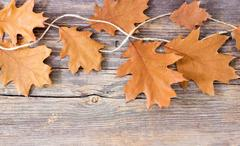 Colorful fall autumn leaves on wood background - stock photo