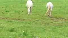White horses on pastureland Stock Footage