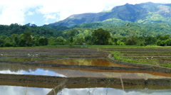 Mountain landscape with rice plantation Stock Footage