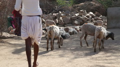 Indian men watching over a herd of sheeps at road, with girls running by. Stock Footage