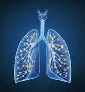 Human lungs and bronchi and oxygen in x-ray view - stock illustration