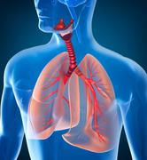 Anatomy of human respiratory system - stock illustration