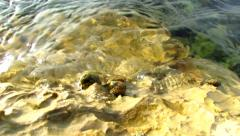 Sea snails on rocks in tide zone Stock Footage
