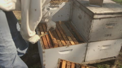 Stock Video Footage of Beekeeper checking honeycomb frame in bee farm