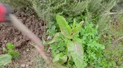 Digging up weeds Stock Footage