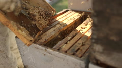Beekeeper removing honeycomb from beehive in bee farm Stock Footage