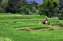 Rice fields, Bali Indonesia Stock Photos