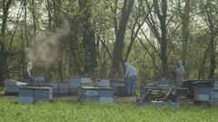Beekeepers working in bee farm Stock Footage