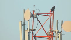 Black kite on the communication mast - stock footage