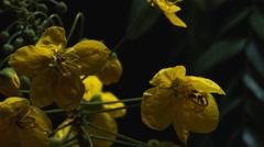 ODD YELLOW FLOWERS / ECU Stock Footage