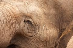 Majestic Endangered Elephant's Eye Close-Up XXL Image. Stock Photos