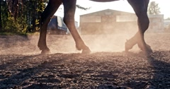 Closeup of the hooves - stock footage