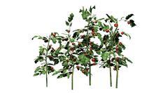 Tomato plants - isolated on white background Stock Illustration