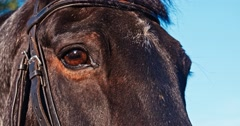 eye of a horse - stock footage