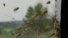 Stock Video Footage of Honey bees swarm near honeycomb