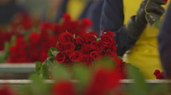 Female workers cleaning and packing red roses Stock Footage