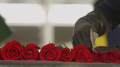 Worker wrapping red roses in plastic Stock Footage
