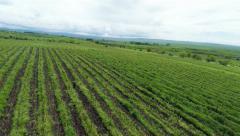 Vineyards in the Kakheti region Stock Footage