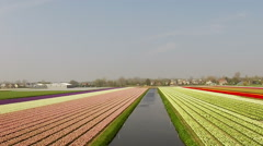 Blossoming tulip fields in the countryside from the Netherlands Stock Footage