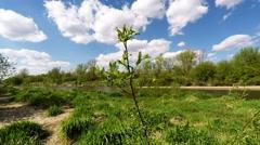 Lawice Kielpinskie nature reserve near Warsaw, Poland Stock Footage