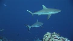 Grey Reef-2006-11-13 16;39;13 Stock Footage