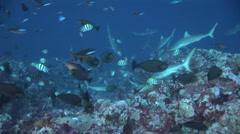 Grey Reef-2006-11-13 16;38;15 Stock Footage
