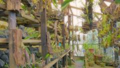 Orchid greenhouse - stock footage