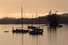 Early morning, boats moored at Opua Harbour, south of Paihia, Bay of Islands, Stock Photos
