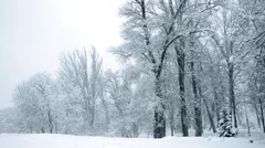 Winter snow in the woods, falling snow video Stock Footage