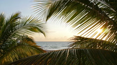 Beautiful shot of palm trees at sunrise Stock Footage