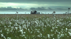 Summer House and Field ICELAND  Stock Footage