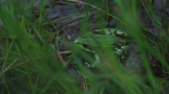 Live green frog in a grass near the lake Stock Footage