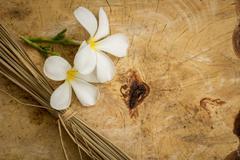 White plumeria classic brown wooden floor surface. - stock photo