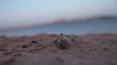 Crab on a beach Stock Footage