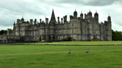 Geese on grass in front of Burghley House, England. Stock Footage